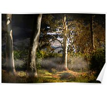 Ghost Gums by Moonlight - Hahndorf, The Adelaide Hills, SA Poster