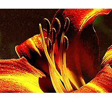 Instant Enchantment Photographic Print