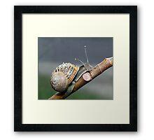 Garden Snail Framed Print