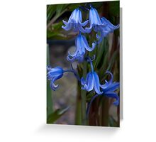 Bluebells. Greeting Card