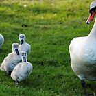 Family of Swans  by Unelanvhi