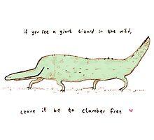 Wild Lizard by Sophie Corrigan