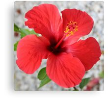 A Stunning Scarlet Hibiscus Tropical Flower Canvas Print