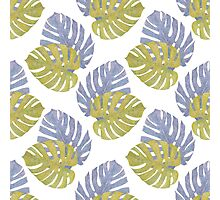 Monstera Leaves Pattern Photographic Print