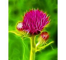 Thistle Fractilius Photographic Print