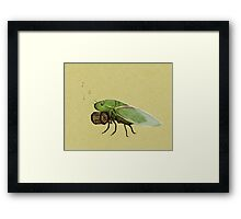 Cicada Playing a Squeezebox Framed Print