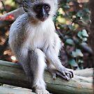 Baby Monkey by PhotoFox