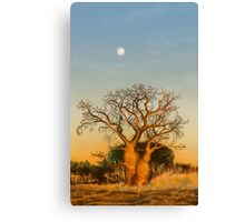 The story of Baobabs Canvas Print