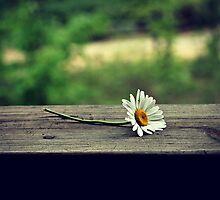 Summer Daisy by savedbygrace