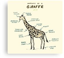 Anatomy of a Giraffe Canvas Print
