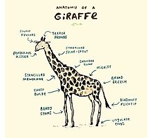 Anatomy of a Giraffe Photographic Print
