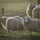 Sheep at dawn by TheWalkerTouch