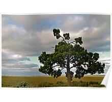 Lone Tree at Lake Mungo Poster