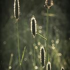 Blacklit Grass by TheWalkerTouch