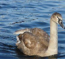 Swan by Emily Clarke