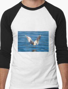 Black-headed gull (Chroicocephalus ridibundus)  Men's Baseball ¾ T-Shirt