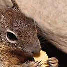 Little Squirl by Luke Donegan