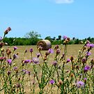 Texas Field by anchorsofhope