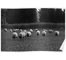 Never trust sheep Poster