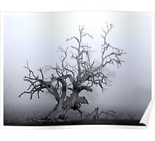 CTAPOE DEPEBO B TYMAHE (Old Tree in the Mist) Poster