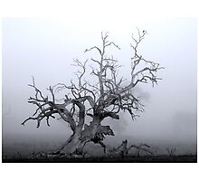 CTAPOE DEPEBO B TYMAHE (Old Tree in the Mist) Photographic Print