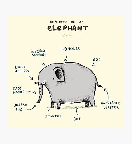 Anatomy of an Elephant Photographic Print