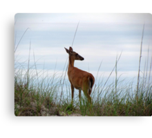 Deer Checking Out The Beach Canvas Print