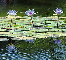 Water Lilies in a Row by Gerda Grice