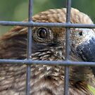 Kea at the zoo by agenttomcat