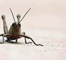 Grass Hopper by Joy Rensch