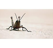 Grass Hopper Photographic Print