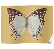 Newab Butterfly Poster