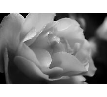 The Black And White Rose. Photographic Print