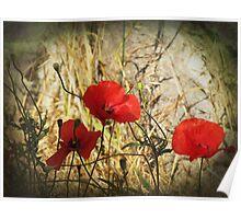 Kos Poppies Poster
