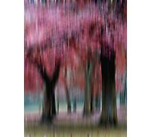 Group of Trees in Motion - red Photographic Print