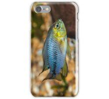 Apistogramma Borelli - Tropical Fish iPhone Case/Skin