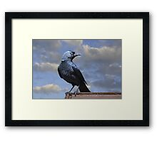 Majestic Jackdaw. Framed Print
