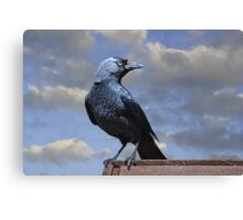 Majestic Jackdaw. Canvas Print