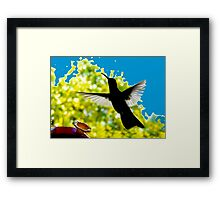 Hummingbird Series 13 Framed Print