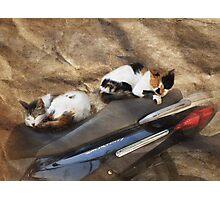 Kute Kitties of Kos Photographic Print