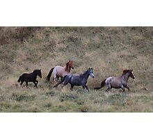 The Brumbies of Dead horse gap  Photographic Print