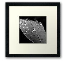 Water drop on leaf VI Framed Print