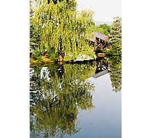 Weeping Reflections Photographic Print