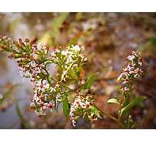 A Sweet Little Wild Flower Photographic Print