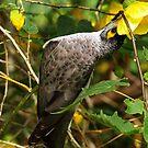 NATURE BIRDLIFE by Colin Van Der Heide