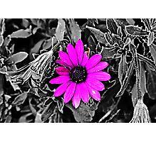 Purple on black Photographic Print
