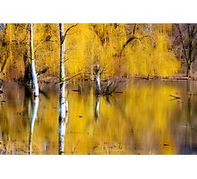 A Magical Confluence Photographic Print
