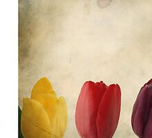 Tulips Vintage by TonyTsiv