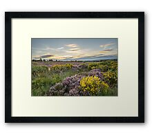 Heather in flower at sunset  Framed Print