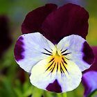 Wildflower, Insh Marshes by asm1